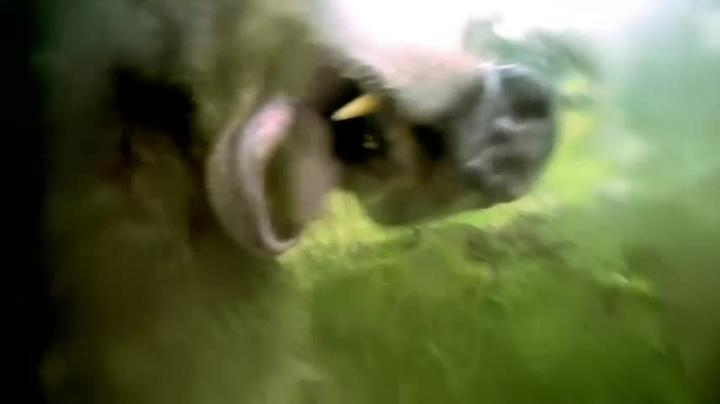 Animals with Cameras 103 Wed 7p