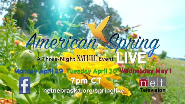 American Spring Live  April 29, 30 & May 1