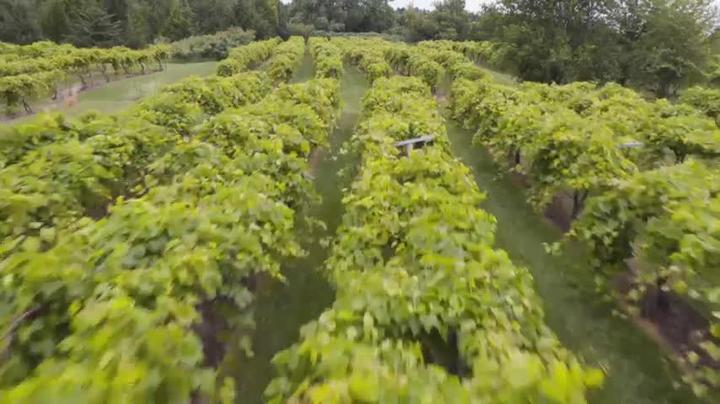 Savor Nebraska Craft Wine Thursday May 28:30pm CT